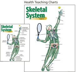 Health Teaching Charts