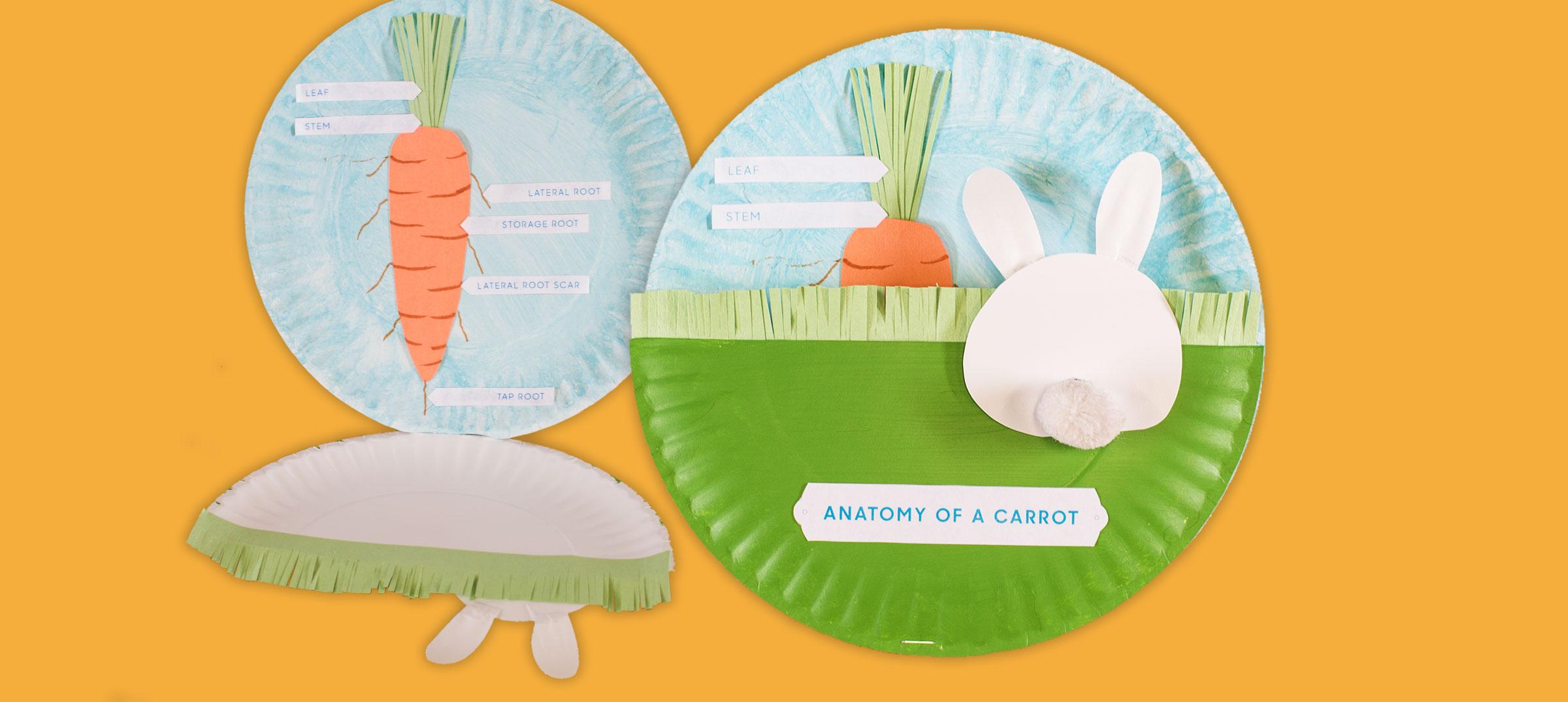 Anatomy of a Carrot - Abeka - Abeka