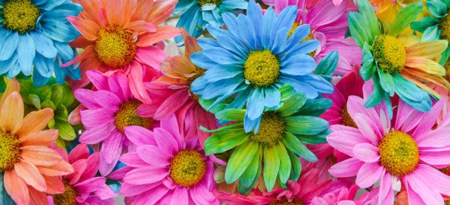 Botany Dyed Daisy